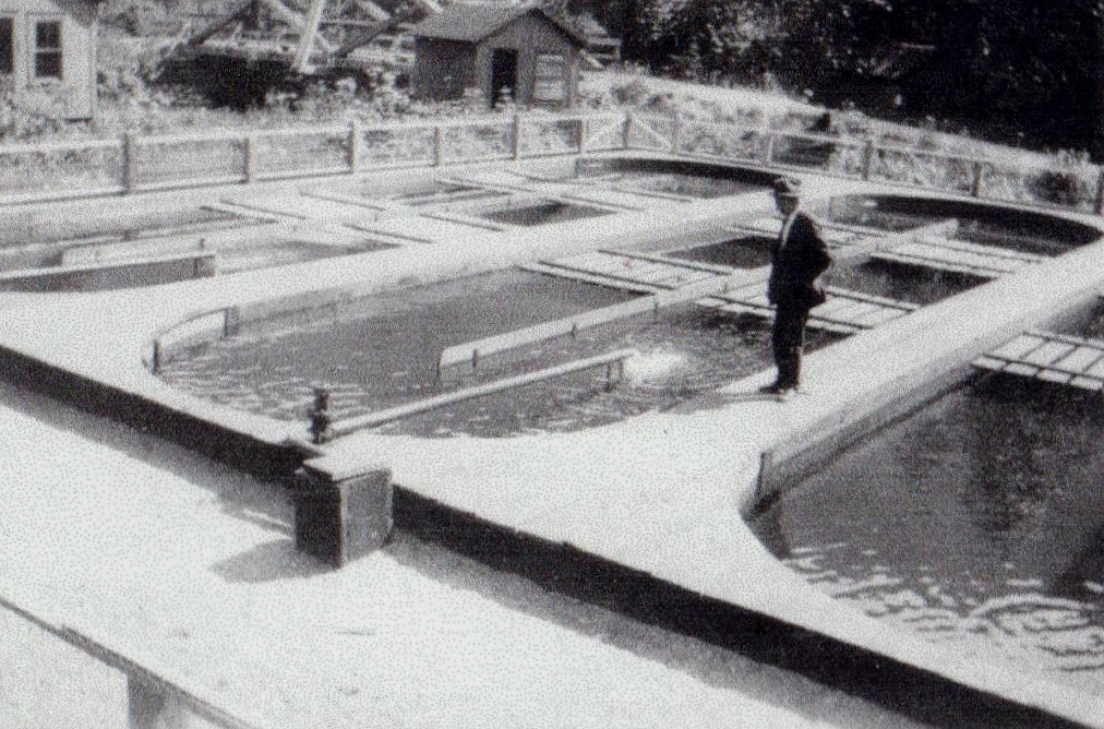 how to build a fish hatchery